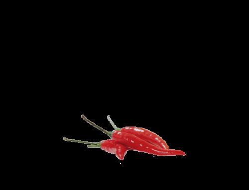 Chili-Salsa